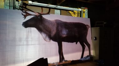 """projecting an image of a reindeer onto 2"""" thick rigid wall insulation."""